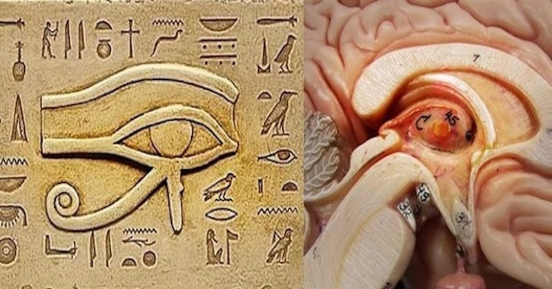 The Pineal Gland: One of the Biggest Secrets Kept from